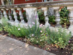 Fountain Walk plants